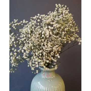 Şoklanmış Beyaz Cipso - Kuru Çiçek