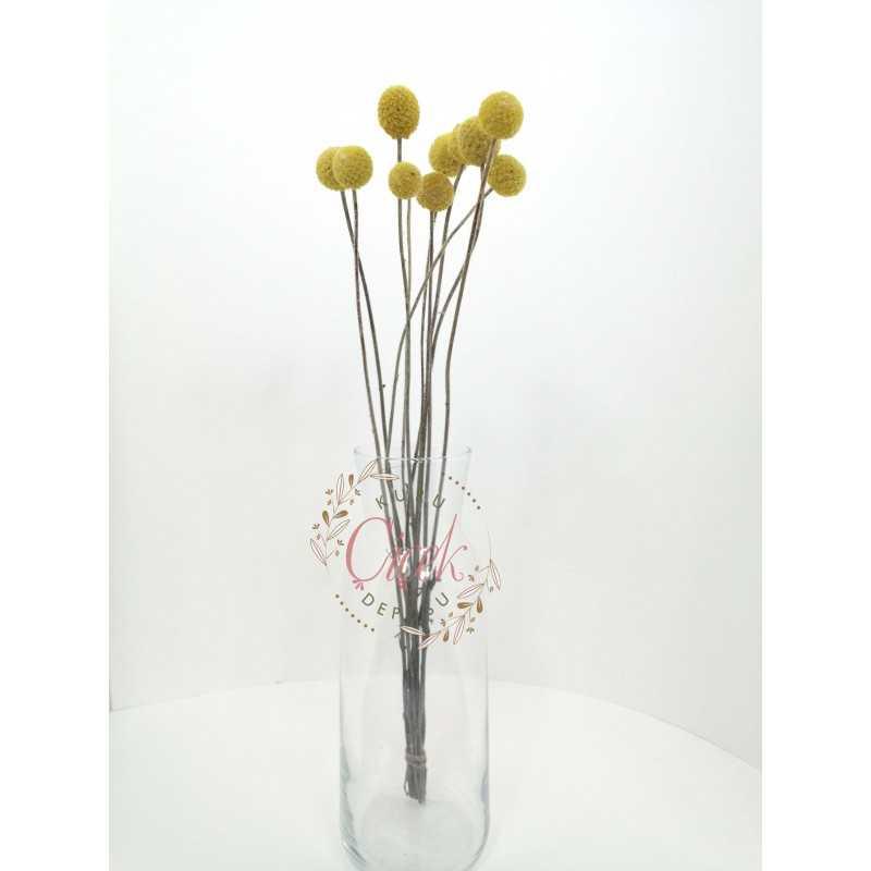 Şoklanmış Doğal Crespedia - Kuru Çiçek