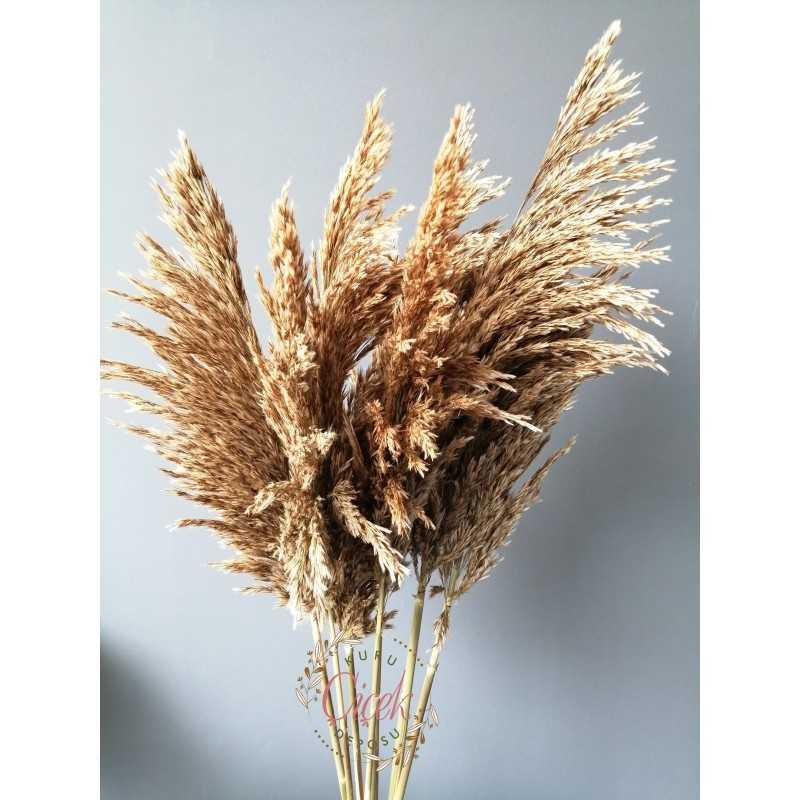 Kuru Çiçek Pampas 7 li Şoklanmış Büyük Demet 100cm (Natural)