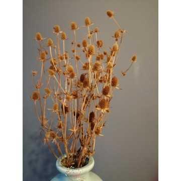 Boğa Dikeni Demeti - Eryngium (Hardal Sarısı)