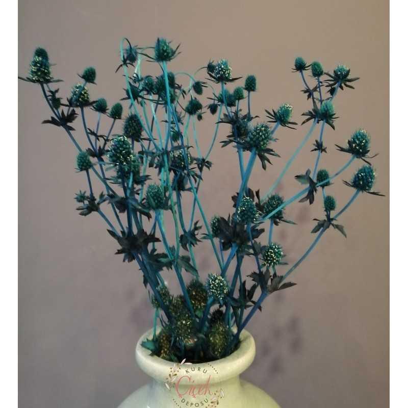 Boğa Dikeni Demeti - Eryngium (Mavi)