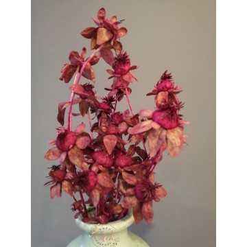 Aspir Çiçeği 20 Kafa (Bordo)