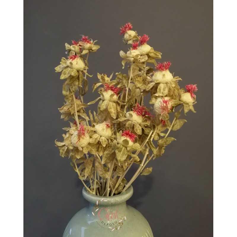 Aspir Çiçeği 20 Kafa (Krem)
