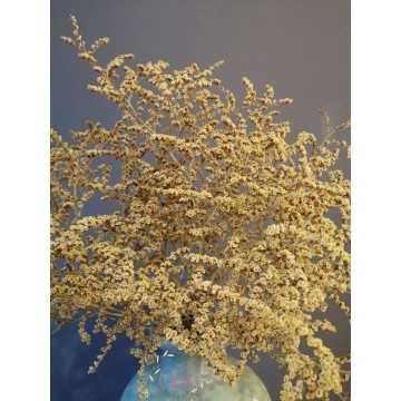 Deniz Otu - Tatarika Kuru Çiçek (Açık Sarı)