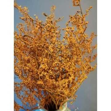 Deniz Otu - Tatarika Kuru Çiçek (Sarı)