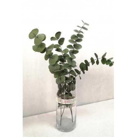 Okaliptus Demeti - Şoklanmış Okaliptus Kuru Çiçek (Yeşil)