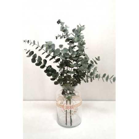 Okaliptus Demeti - Şoklanmış Küçük Okaliptus Kuru Çiçek (Yeşil)